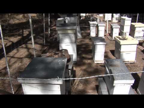 Local honey helps during allergy season