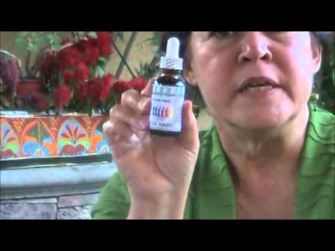 Natural Herb Witch Hazel repairs damage in the spleen