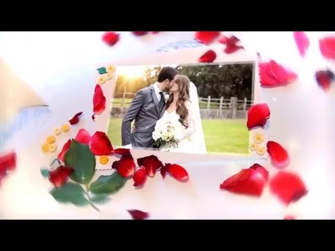 The Wedding Roses Gallery