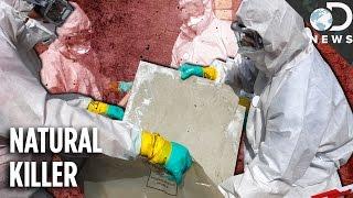 WTF Is Asbestos, Really?!