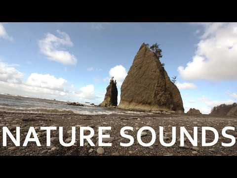 Gorgeous Nature Sounds from the US Pacific Northwest