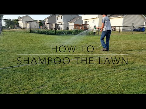 How to Shampoo the Lawn