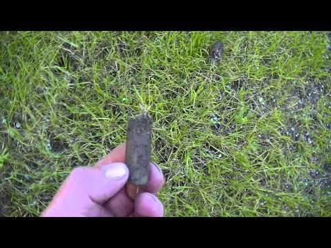 Follow up On  Peat Moss Covered Seed Videos