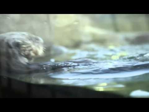 Marine mammals in danger in the wild