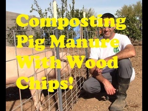 Composting Pig Manure With Woodchips