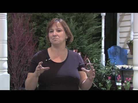 How To Grow Plants Flowers How To Grow A Braided Money Tree