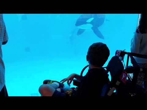 A Special Needs Boy Finds the Killer Whales (Orcas) at Sea World to be Very Calming