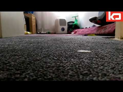 How to clean Chewing Gum from Carpet