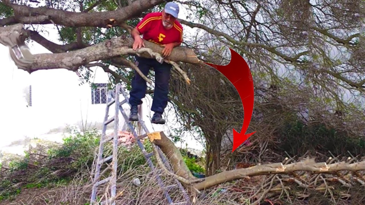 Top 10 DangerousTree Felling Fails Compilation & Idiots With Chainsaw ! Tree Falling in House