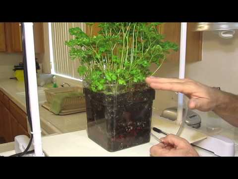 How to achieve amazing results indoors, growing in soil.
