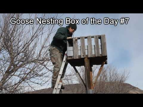Annual Goose Nesting Boxes Maintenance