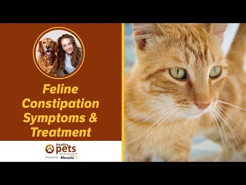 Feline Constipation Symptoms & Treatment