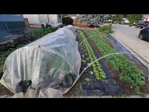 IN FOCUS: Poly Low Tunnels
