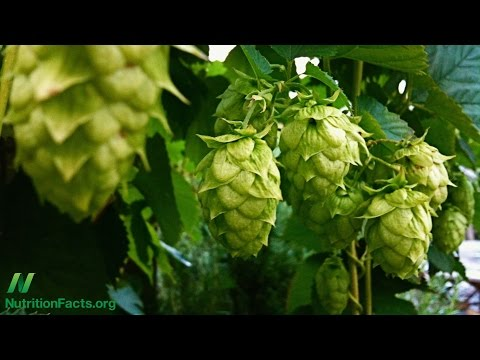 What are the Effects of the Hops Phytoestrogen in Beer?