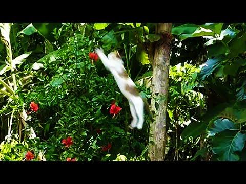 Cat catching a bird - Amazing HUNTER CAT jumbs very high to catch a bird !