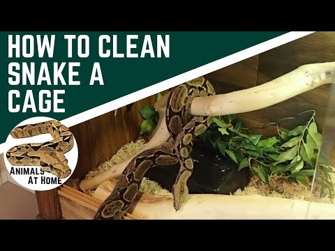 How to Clean a Snake Tank