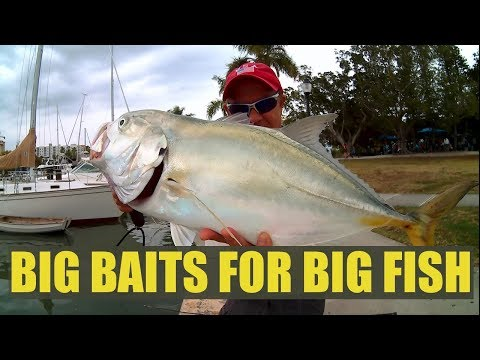 Fishing Big Baits Huge Hook Ups Catching Giant Jack Crevalle