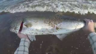 Surf Fishing For Bluefish With Bunker Chunks (may 2016)