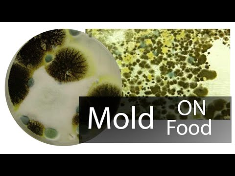 5 Tips To Stop Mold And Protect Your Kitchen