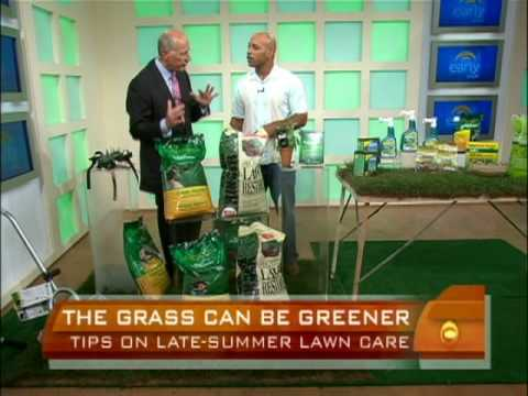 Late-Summer Lawn Care