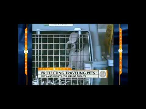 Puppies Die During AA Flight, Tips
