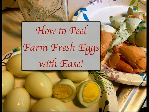 How to Peel Farm Fresh Eggs with Ease!