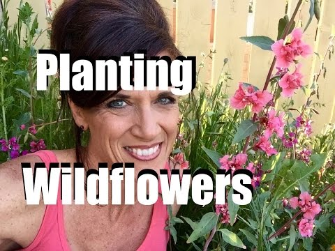 Planting Wildflower Seeds in Early Spring for Color, Pollinators and  Weed Control // CaliKim Cam