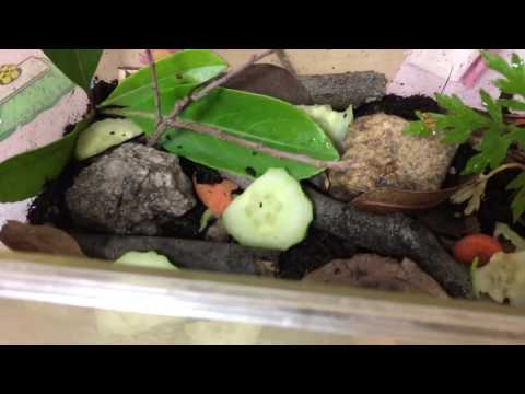 Roly Poly / Pill Bug habitat