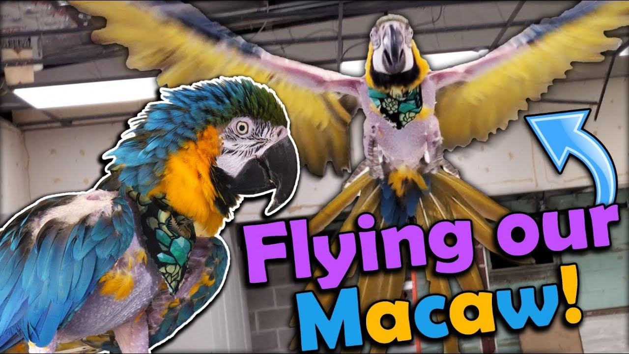 An Adventure with Cheyenne, our Macaw!
