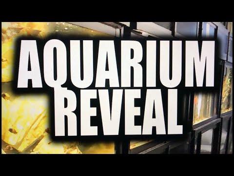 NEW aquarium reveal - saltwater tank!!