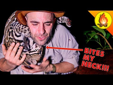 Jungle Cat Bites My Neck!