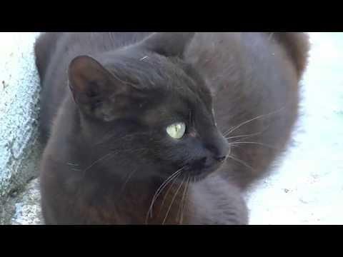 Pregnant feral cat calling me