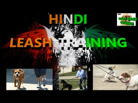 How to Train your Dog to Walk on Leash! { dog training in hindi }