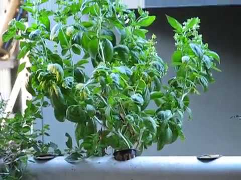 Off the Grid in Oz and growing in hydroponic  pipes