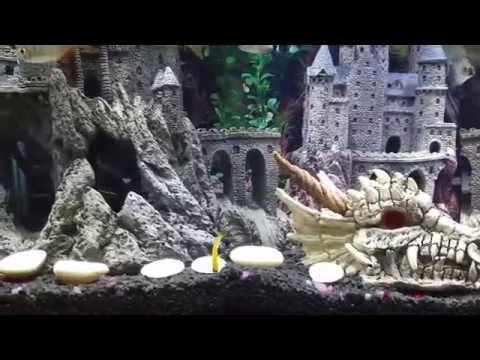 My Game of Thrones aquarium theme....Fish tank.