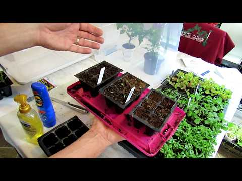 How to Build Vegetable Winter-Sowing & Acclimation Domes: TRG DIY Ep-1