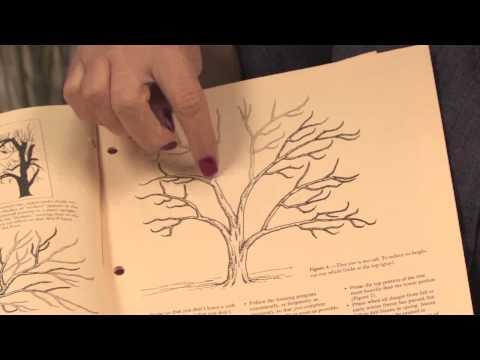 Garden Maintenance Tips : Orange Tree Pruning