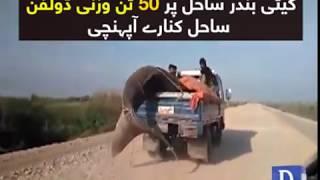 Thatta: 50 ton wazni dolphin mahi-giro kay haatho shikaar