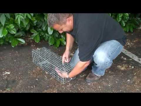 SX Environmental - Squirrel Cage Trap