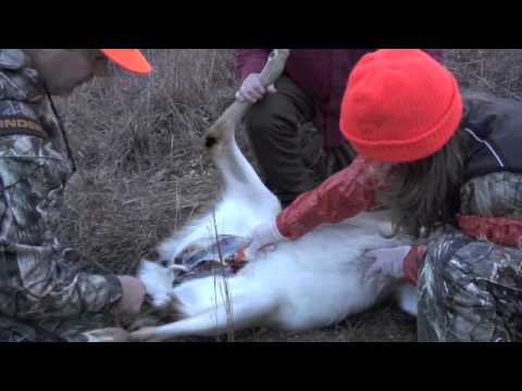 How To Gut A Deer Never Without Field Dressing First Time