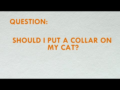 Should I Put A Collar On My Cat?