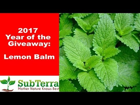 Lemon Balm a Must Grow for the Garden and Homestead ** Giveaway video **