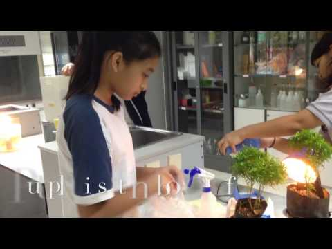 The Effect of Acid & Distilled Water in Plants Growth - Science Fair 2015