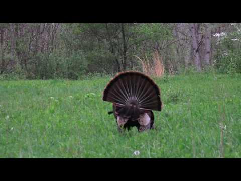 Indiana Youth Turkey Hunt