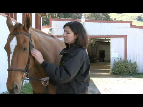 Where to Find a Pulse On Your Horse