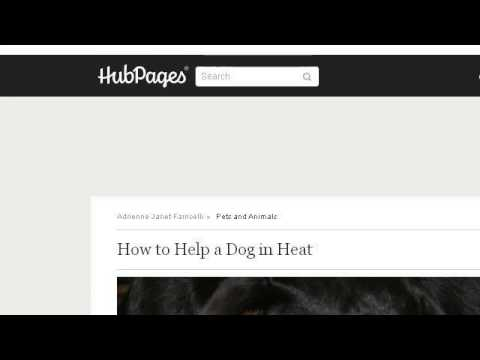 How-To Encourage A Male Dog To Mate