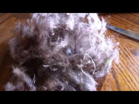 Pound of Hair Found in Vacuum Bristles!!!