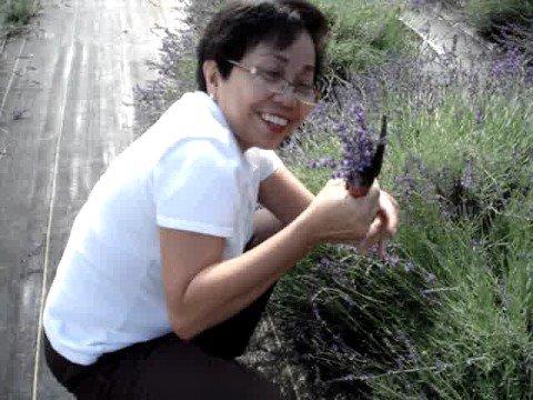 Marita Cutting Lavender