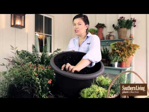How to Plant a Container Garden for Your Front Porch