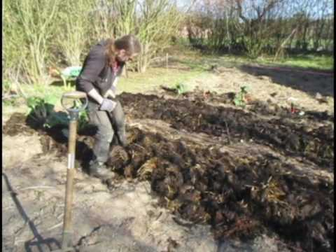 Setting up a new garden using horse manure